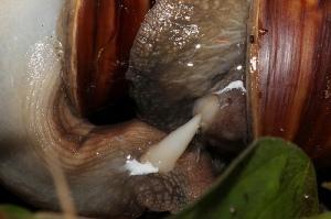 Hardcore mollusc action